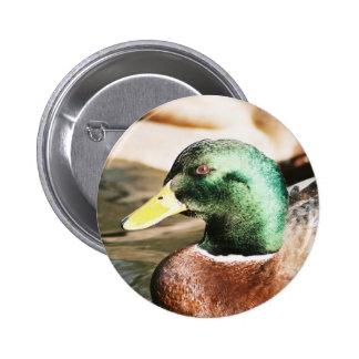 Mallard Drake Pinback Button
