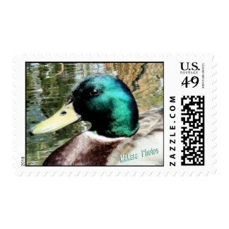 Mallard Drake stamp
