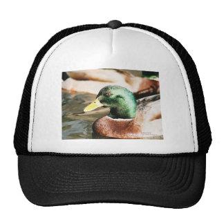 Mallard Drake Trucker Hat