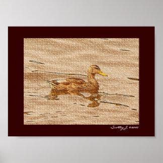 Mallard Duck © 2009 S.J. Poster
