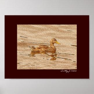 Mallard Duck © 2009 S.J. Posters