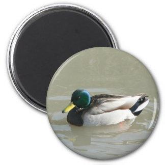 """""""Mallard Duck"""" 2 Inch Round Magnet"""
