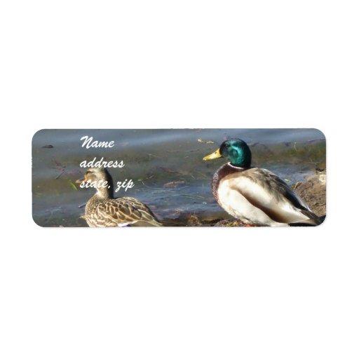 Mallard duck address labels