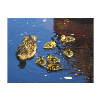 Mallard Duck and Ducklings Canvas Print