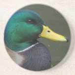 Mallard duck beverage coasters