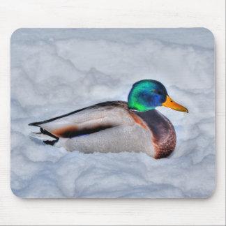 Mallard Duck Birdlover Wildlife Photo Mouse Pad