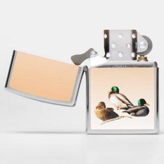 Mallard Duck Birds Wildlife