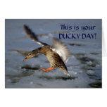Mallard Duck Birthday Card