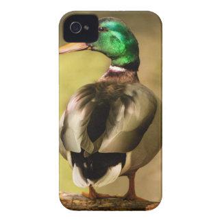 Mallard Duck Blackberry Case