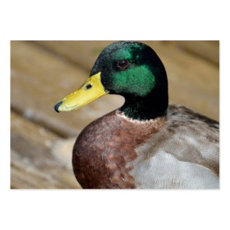 Mallard Duck Large Business Cards (Pack Of 100)