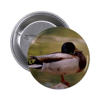 Mallard Duck Button