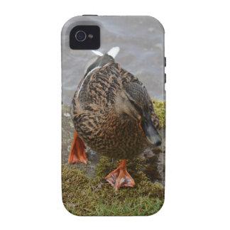 Mallard Duck Case-Mate iPhone 4 Covers