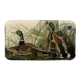 Mallard Duck iPhone 3 Case-Mate Cases