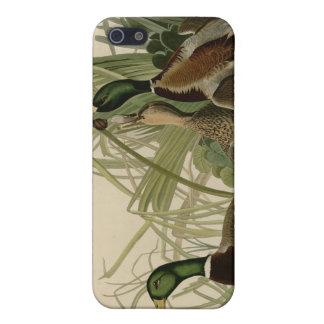 Mallard Duck Case For iPhone SE/5/5s