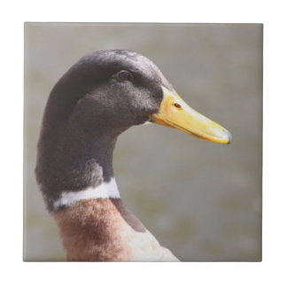 Mallard Duck Ceramic Tile