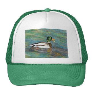 Mallard Duck Colored Pencil Art Hat