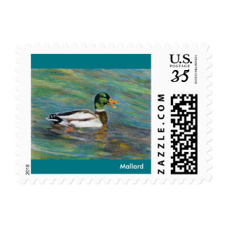 Mallard Duck Colored Pencil Drawing Postage