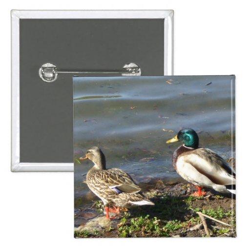Mallard duck couple button