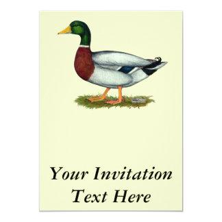 Mallard Duck Drake Card