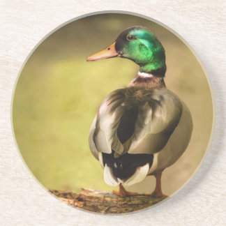 Mallard Duck Drink Coaster
