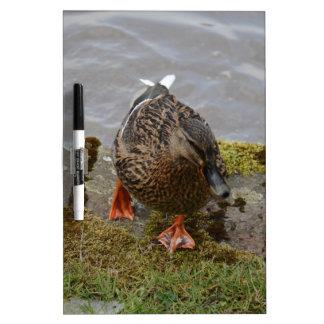 Mallard Duck Dry Erase Board