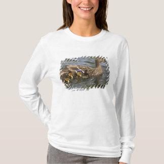 Mallard Duck female and chicksAnas T-Shirt