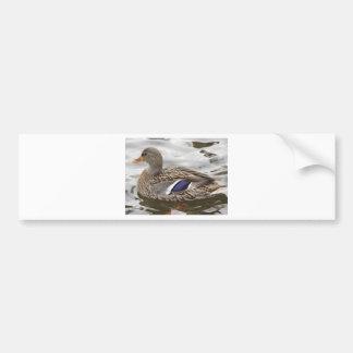 Mallard Duck Female Bumper Sticker