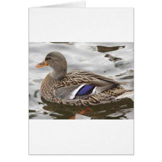 Mallard Duck Female Card