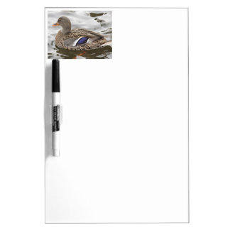 Mallard Duck Female Dry Erase Board