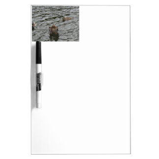 Mallard Duck Female Dry Erase Whiteboards