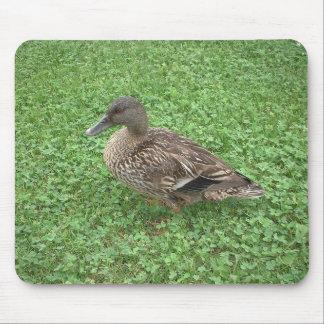 Mallard Duck Female Photo Mouse Pad