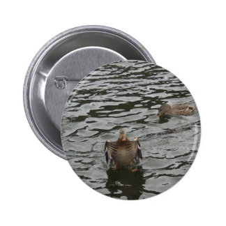 Mallard Duck Female Pins