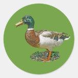 Mallard Duck Gift Sticker