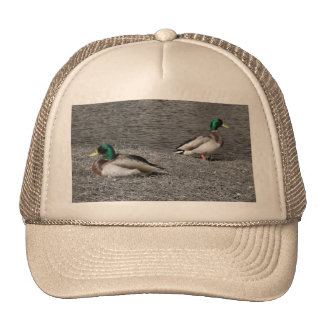 Mallard Duck Hat