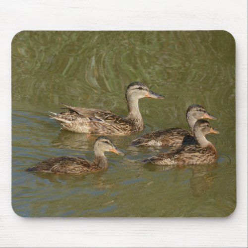 Mallard Duck hen and ducklings Mouse pad