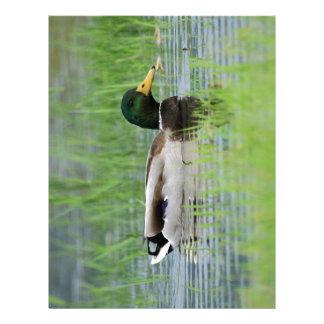 Mallard duck in a pond letterhead