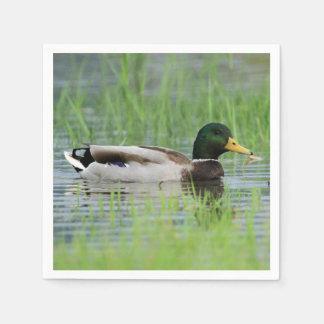 Mallard duck in a pond napkin