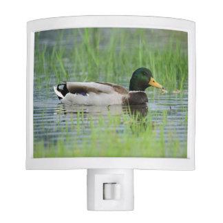 Mallard duck in a pond night light