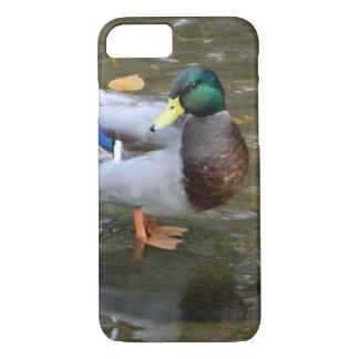 Mallard Duck in Clear Creek iPhone Case