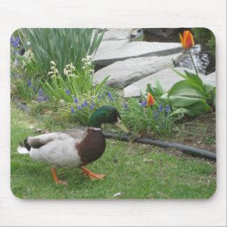 Mallard Duck In Garden Mouse Pad