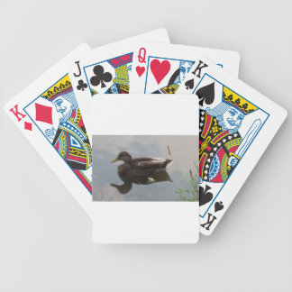 Mallard duck in the water bicycle playing cards