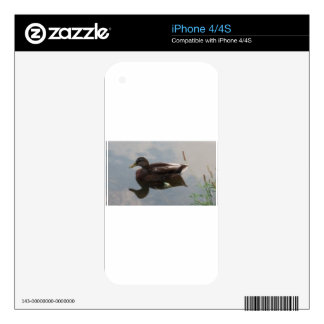 Mallard duck in the water skin for iPhone 4