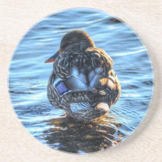 Mallard Duck in Winter River - Wildlife Photo Sandstone Coaster