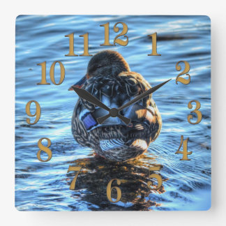 Mallard Duck in Winter River - Wildlife Photo Square Wall Clock