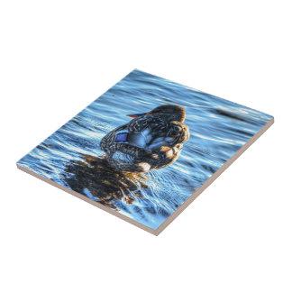 Mallard Duck in Winter River - Wildlife Photo Ceramic Tiles