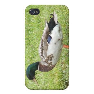 Mallard duck iPhone 4/4S cover