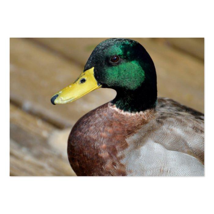 Mallard Duck Large Business Card