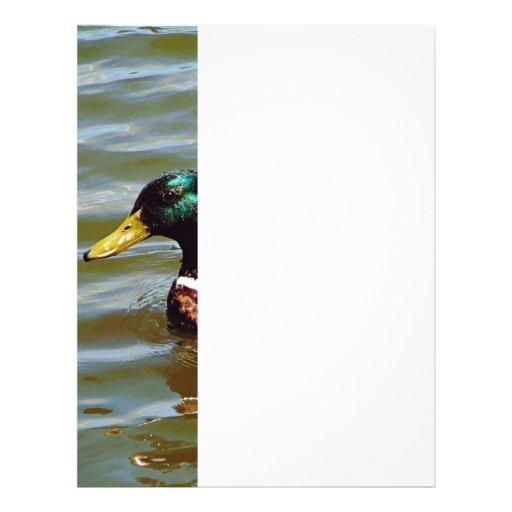 Mallard Duck Letterhead