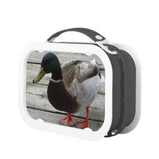 Mallard Duck Lunch Box