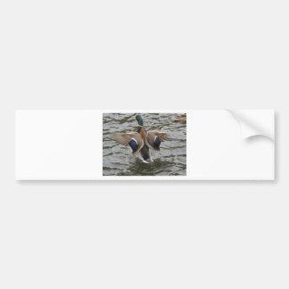 Mallard Duck Male Bumper Sticker